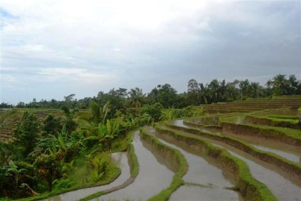Tanah dijual di Tabanan Bali view sawah terasering – TJTB018