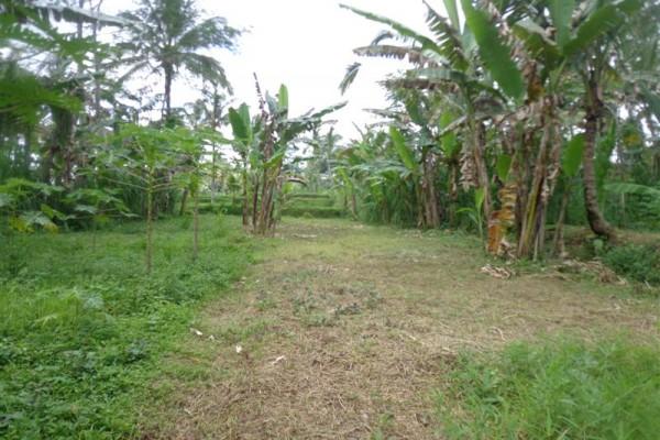Jual tanah di Ubud – TJUB165 view sawah dan kebun