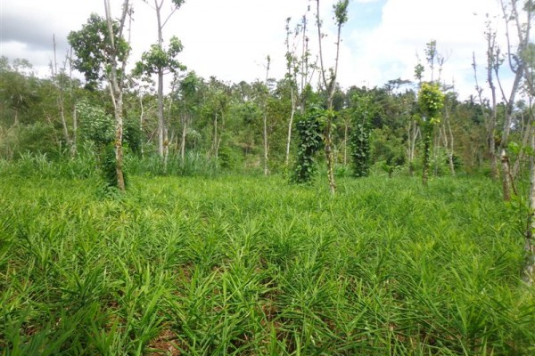 Dijual Tanah di Ubud Bali – TJUB167 view hutan, sungai dan kebun