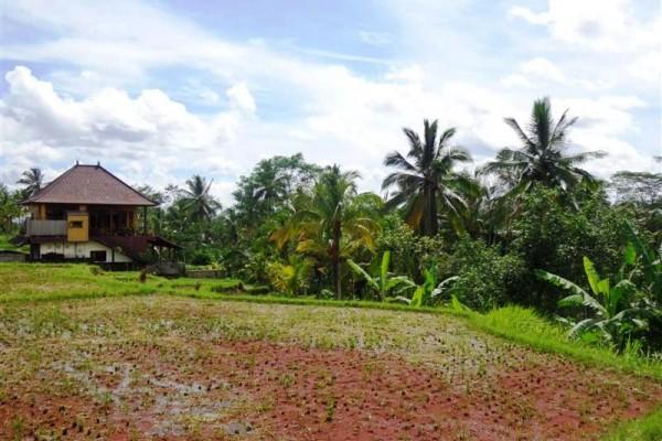 Dijual tanah 1,5 hetar di Ubud Bali – TJUB168 view sawah