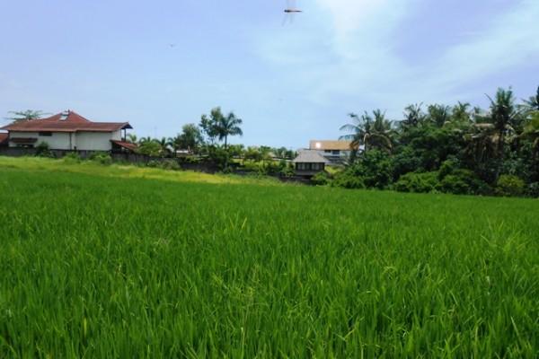 Tanah di Canggu dijual 20 Are Dekat pantai view sawah di Canggu