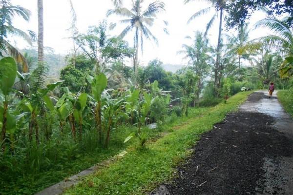 Tanah dijual di Ubud Bali 105 Are di Ubud Tegalalang