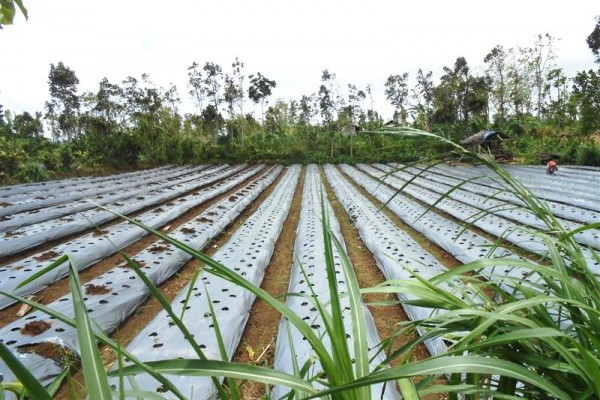 Jual tanah di Bali 1000 m2 View Gunung di Tabanan
