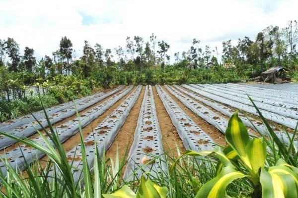 Tanah dijual di Tabanan Bali view perkabunan  – TJTB035