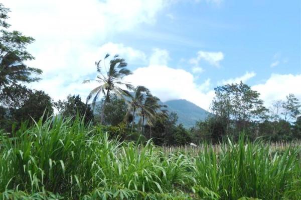Tanah dijual di Tabanan Bali lahan datar dengan view gunung – TJTB033