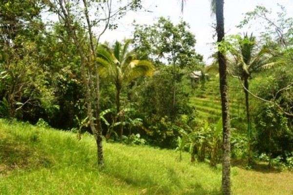 Tanah dijual di Tabanan Bali view sawah di Jatiluwih – TJTB029