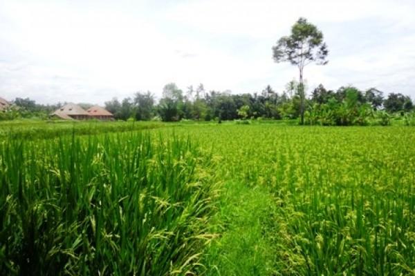 Tanah di Bali dijual 16 Are di Ubud Pejeng
