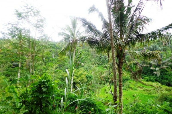 Tanah di Ubud dijual 120 Are View sawah Tepi sungai di Ubud Tegalalang