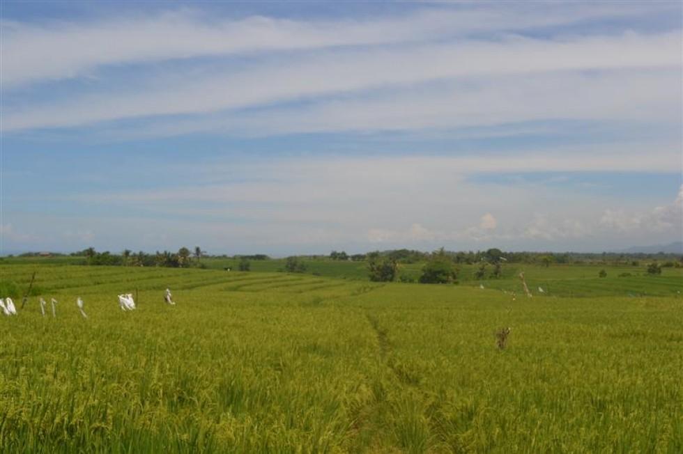 Tanah dijual di Tabanan Bali view cantik ke gunung dan Sawah – TJTB022