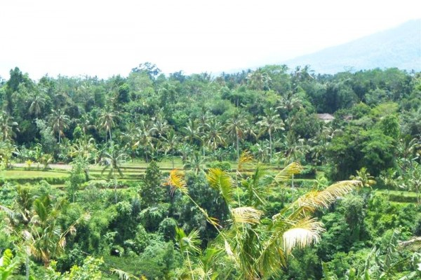 Tanah di Bali dijual 14.500 m2 di Tabanan