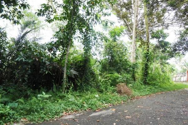 Jual tanah di Ubud Bali 125 Are di Ubud Tegalalang
