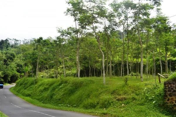 Jual tanah di Bali 12,5 Are di Tabanan Baturiti