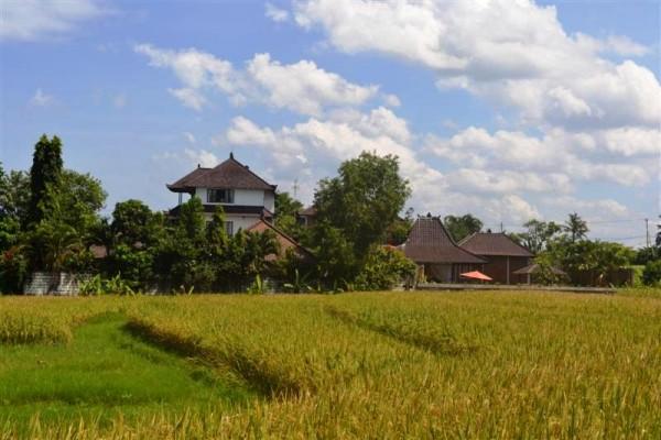 Tanah di Canggu Bali dijual 2.360 m2 di Canggu Pererenan