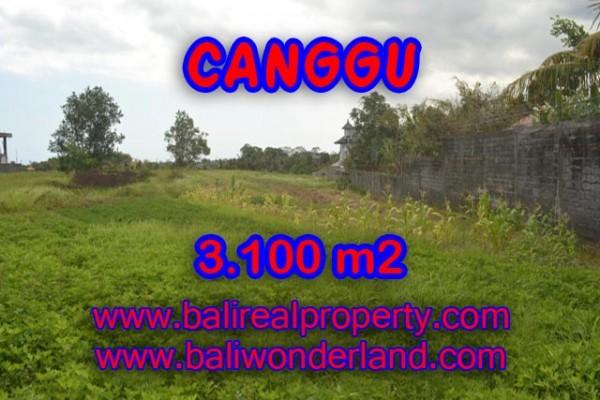 Tanah dijual di Bali View sawah 3.100 m2 di Canggu Batu Bolong