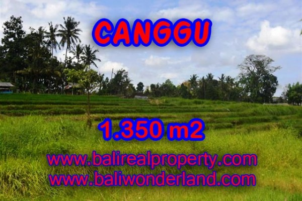 Tanah dijual di Canggu view sawah,sungai di Canggu Pererenan Bali