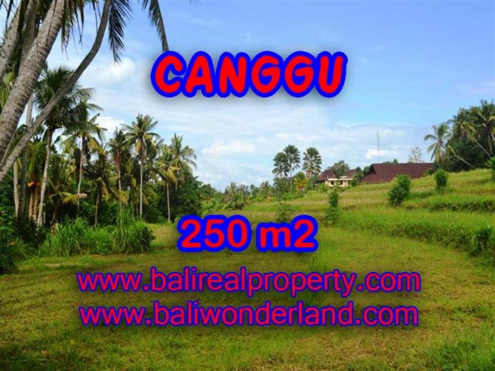 Tanah dijual di Canggu 250 m2 di Canggu Pererenan Bali