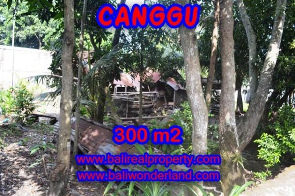 Jual tanah di Canggu Bali TJCG107