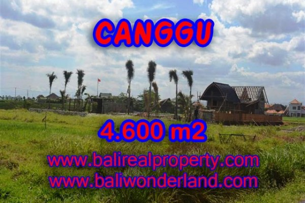 Tanah dijual di Bali 46 Are View sawah, laut , sungai di Canggu pererenan – TJCG117