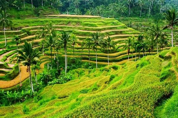 UBUD – pusat seni dan budaya Bali