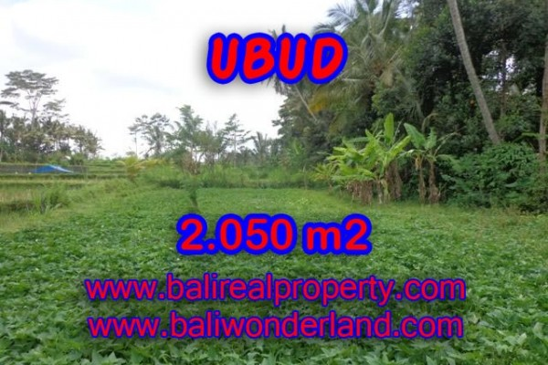 Tanah di Ubud dijual 20,5 Are di Ubud Pejeng Bali