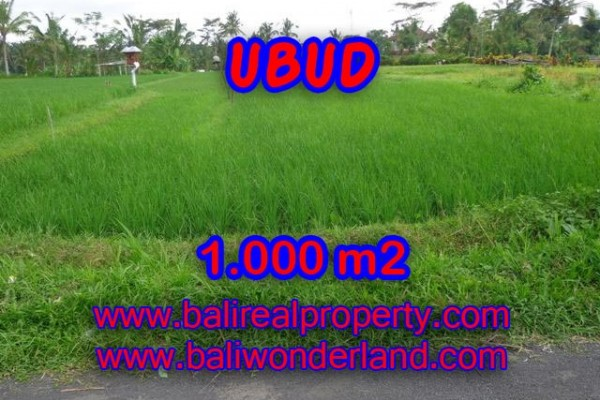 Jual tanah di Ubud Bali 10 Are di Ubud Tampak siring