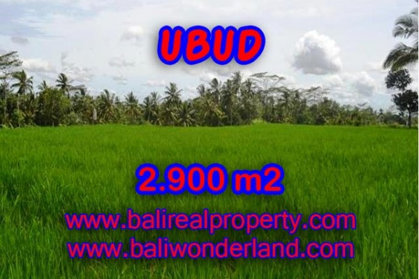 Tanah di Ubud dijual 2.900 m2 di Ubud Payangan