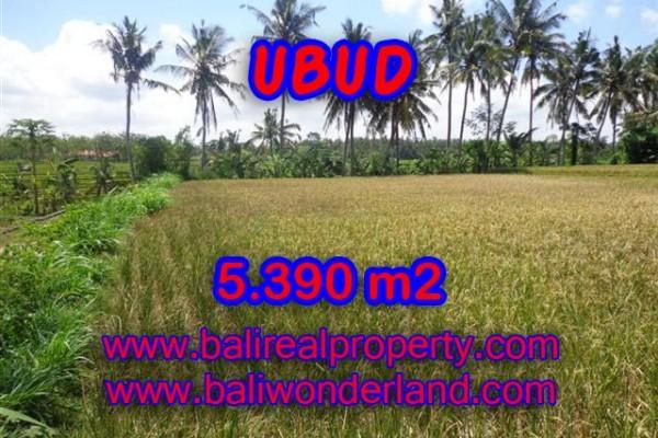 Jual tanah di Ubud 53,9 Are di Ubud Mas Bali