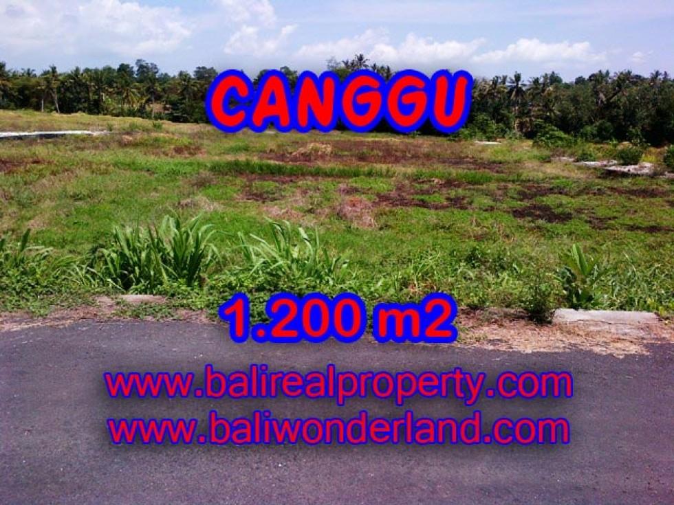 Tanah dijual di Canggu Bali ( TJCG126 )