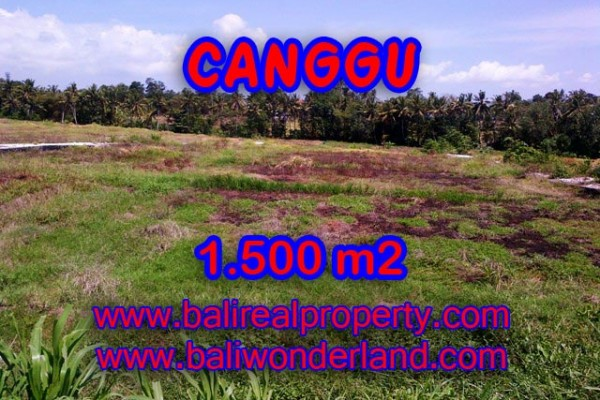 Tanah di Canggu Bali dijual View sawah di Tumbak Bayuh