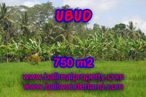 Tanah di Bali dijual murah 750 m2 di Dekat sentral Ubud