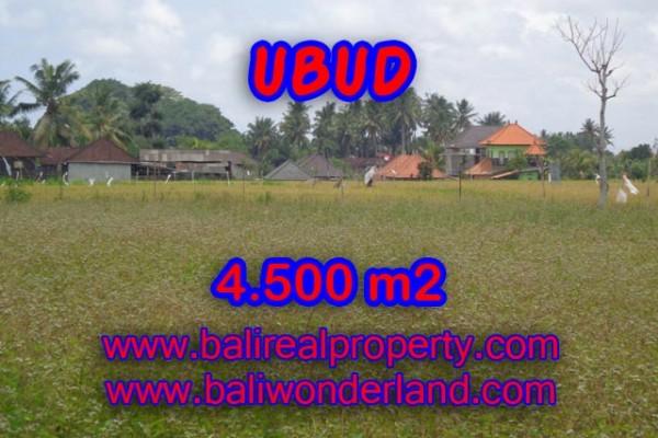 Tanah di Bali dijual 45 Are di Dekat sentral Ubud