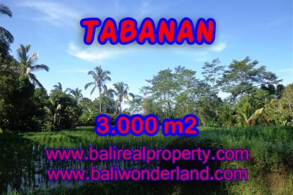 INVESTASI PROPERTI DI BALI – DIJUAL TANAH DI TABANAN BALI CUMA RP 170.000 / M2