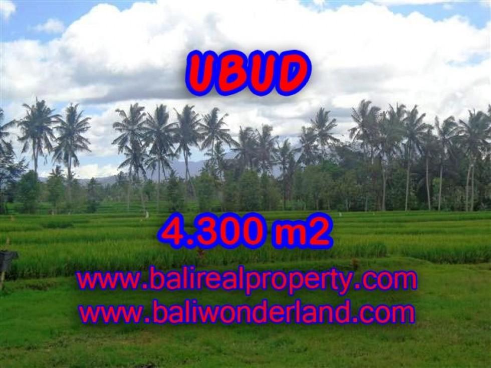 JUAL TANAH DI UBUD BALI MURAH RP 2.350.000 / M2 – TJUB370