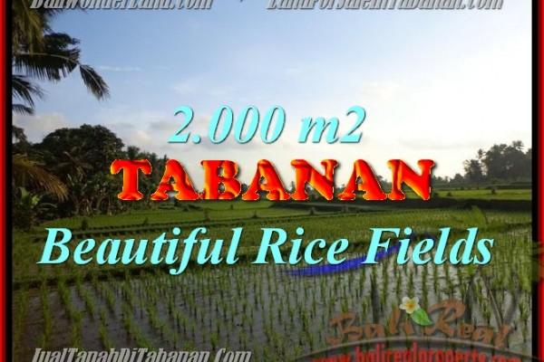 DIJUAL TANAH DI TABANAN RP 500.000 / M2 – TJTB151 – INVESTASI PROPERTY DI BALI