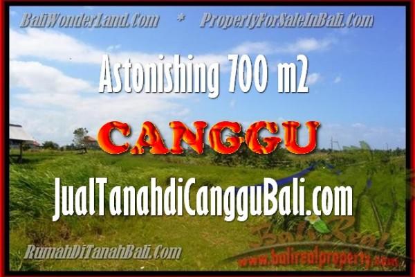 TANAH MURAH DIJUAL di CANGGU 7 Are di Canggu Kayu tulang