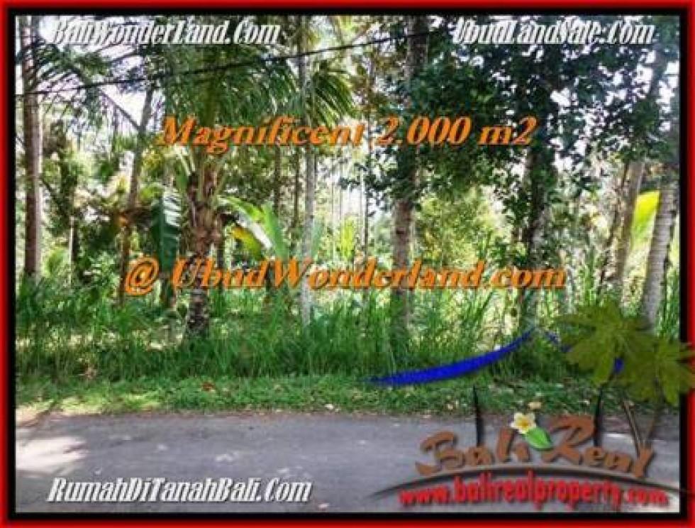DIJUAL TANAH di UBUD BALI Untuk INVESTASI TJUB506