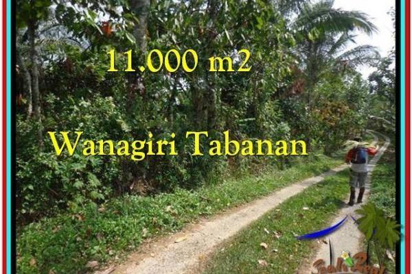JUAL MURAH TANAH di TABANAN 11.000 m2 di Tabanan Selemadeg