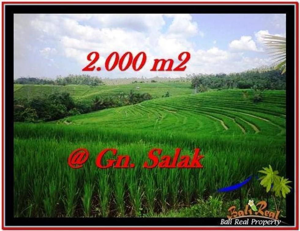JUAL TANAH MURAH di TABANAN BALI 2,000 m2 di Tabanan Selemadeg