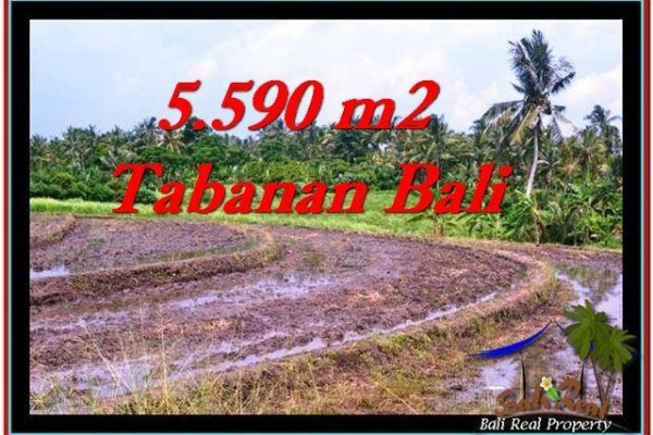JUAL TANAH MURAH di TABANAN BALI 5,590 m2 di Tabanan Selemadeg