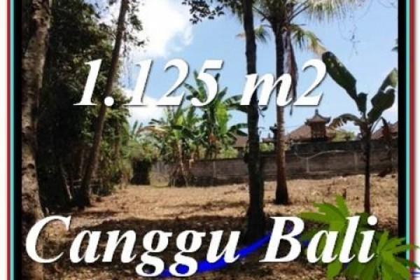 TANAH MURAH di CANGGU BALI 11.25 Are di Canggu Pererenan