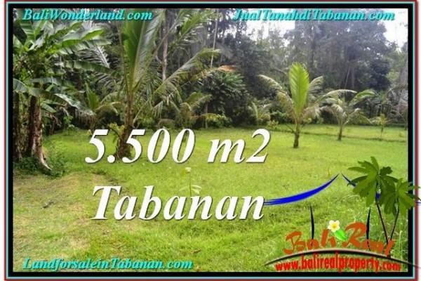 JUAL TANAH MURAH di TABANAN BALI 5,500 m2 di Tabanan Penebel
