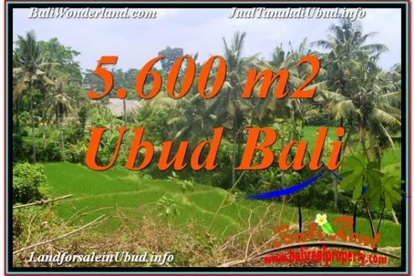 INVESTASI PROPERTY, TANAH di UBUD BALI DIJUAL MURAH TJUB636