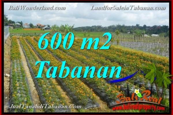 INVESTASI PROPERTI, TANAH MURAH DIJUAL di TABANAN BALI TJTB372