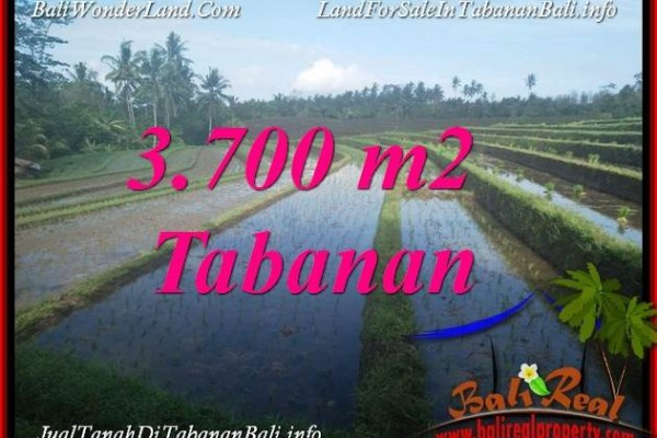JUAL TANAH DI TABANAN BALI 3,700 m2  VIEW LAUT DAN SAWAH