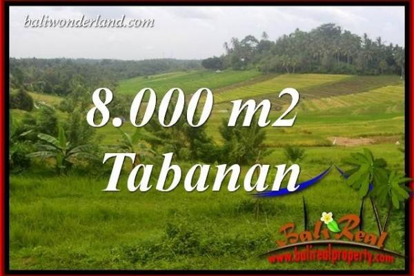 Tanah Murah di Tabanan Bali 80 Are View Sawah