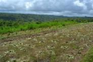 Dijual tanah di Pelaga, lawak ( 30 are ) – TJBD007