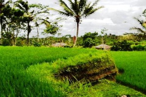 Jual tanah di Ubud Tegalalang view  sawah tebing tepi sungai  TJUB038