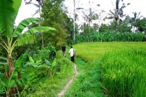 Tanah dijual di Ubud, view cantik alami harga super murah 120 rb/m2 – TJUB091