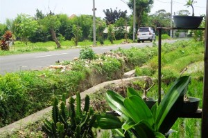 Tanah dijual di Canggu  view sawah harga murah Pinggir jalan – TJCG074