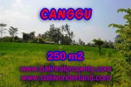 Tanah di CANGGU Bali Dijual murah TJCG135 – investasi property di Bali